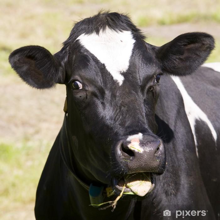 Poster Dutch cow - Säugetiere