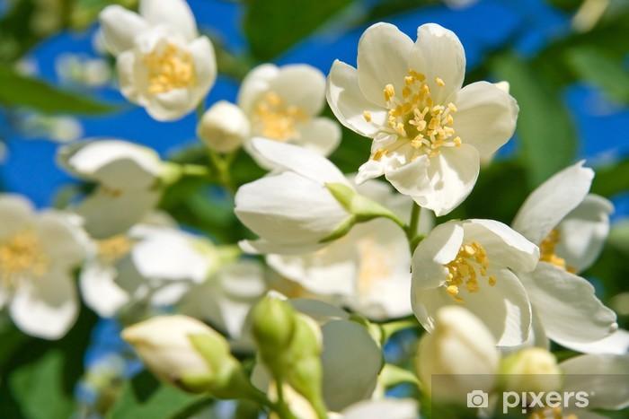 Fototapeta winylowa Jasmin przeciw błękitne niebo - Pory roku