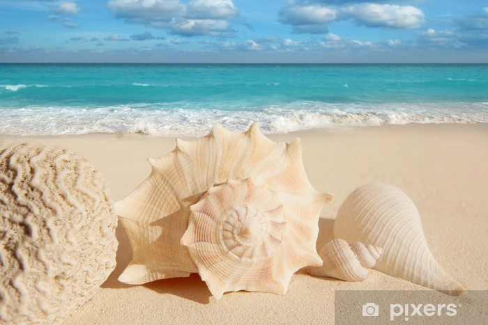 Fotomural Estándar Conchas de mar estrella de mar turquesa del Caribe tropical de arena - Destinos