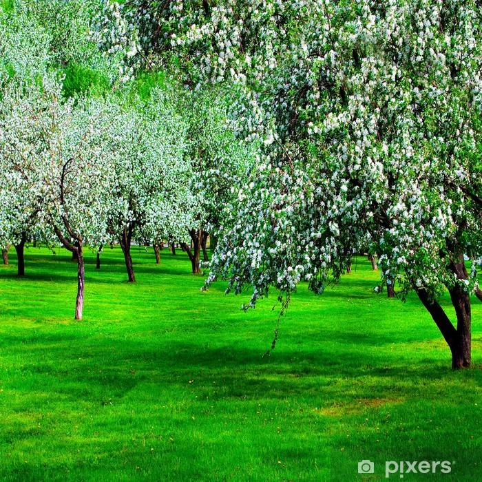 Poster Fleur blanche de pommiers au printemps - Saisons
