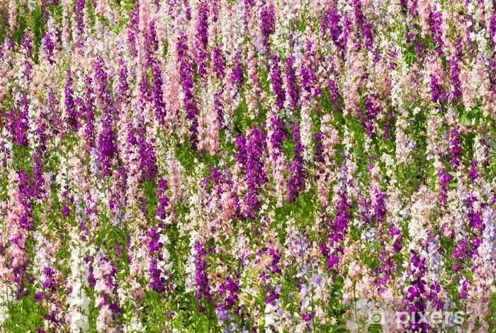 Fototapeta winylowa Kwiaty delfinium - Kwiaty