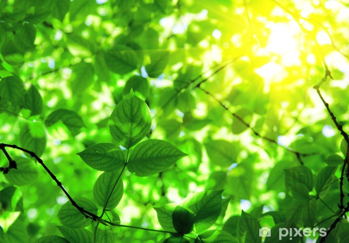 Nálepka Pixerstick Zelené listy a slunce - Témata