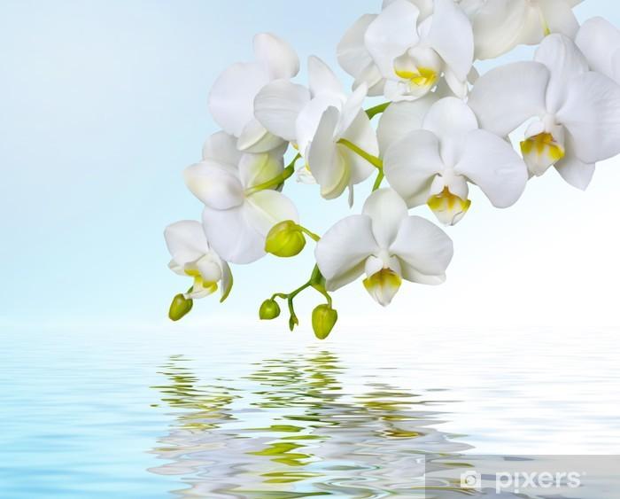 Fototapeta winylowa Białe orchidee odzwierciedlających w wodzie - Szczęście
