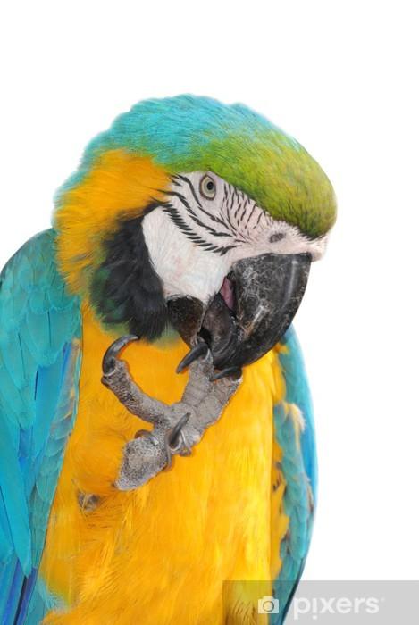 какие ноги у попугая ара картинки стал летом постоянно