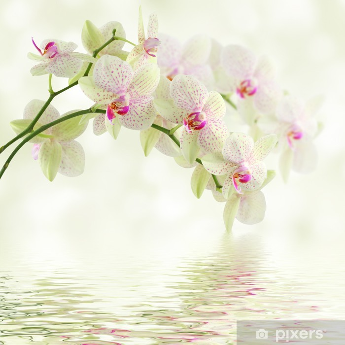 White orchid on a light background Framed Poster - Themes