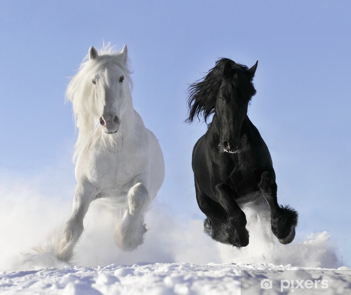 Vinilo Pixerstick Caballo blanco y negro - Destinos