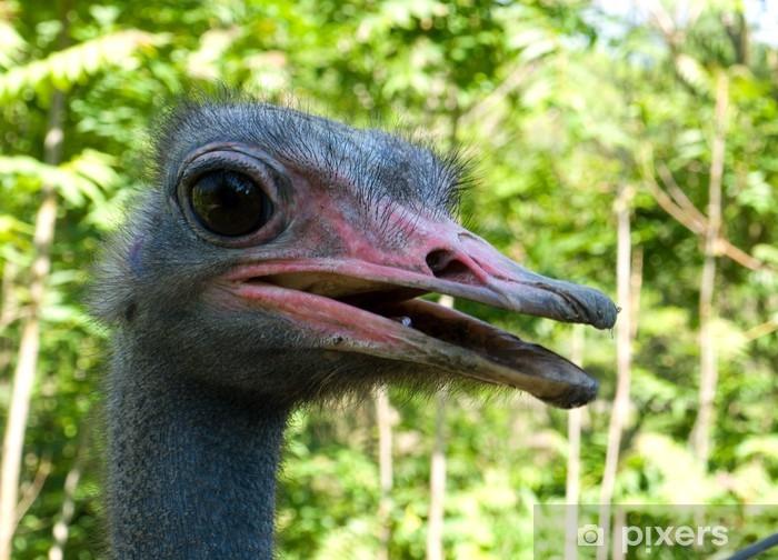 ostrich Pixerstick Sticker - Birds