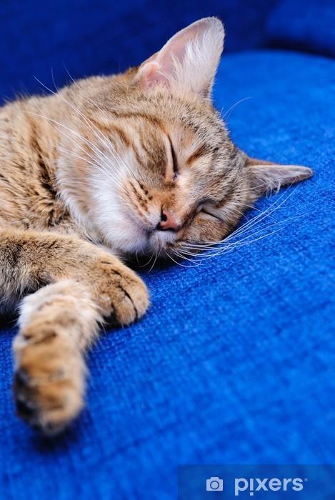 Nálepka Pixerstick Spící kočka - Savci