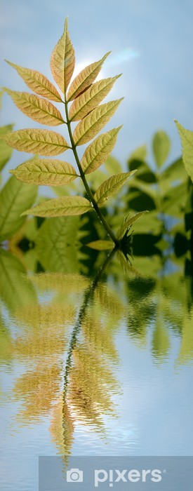 Naklejka Pixerstick Kolorowe łąki z refleksji wody - Pory roku