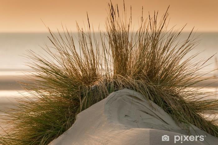 foto de Fotobehang Helmgras op de duinen op het strand • Pixers