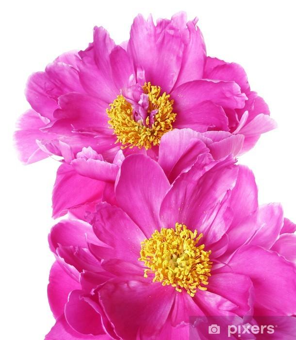 Naklejka Pixerstick Dwa kwiaty piwonii - makro - Kwiaty