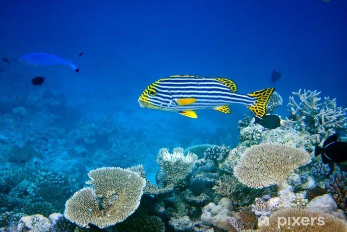 Naklejka Pixerstick Ocean Indyjski. . Ryby w koralowce. - Tematy