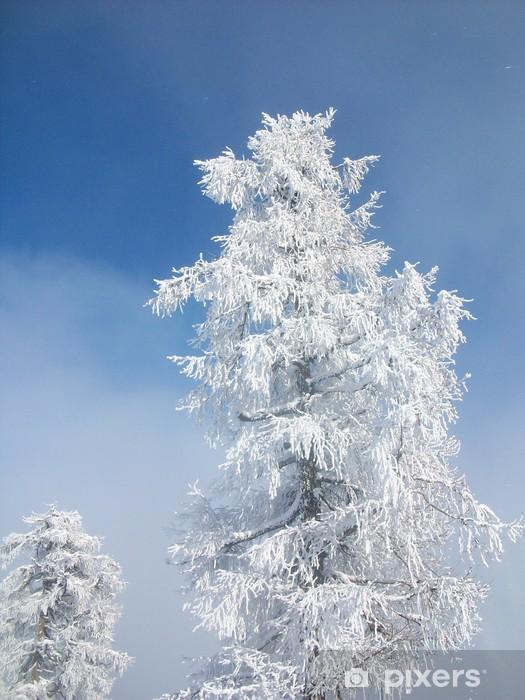 Fototapeta winylowa Mrożone drzewa - Pory roku