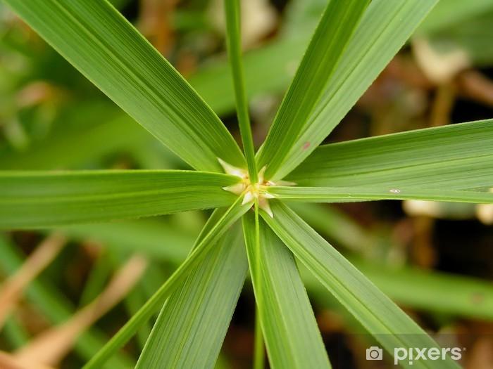 Papier peint vinyle Cyperus papyrus - Plantes