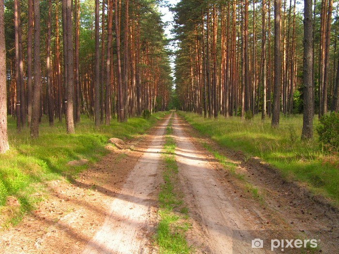 path in the forest Pixerstick Sticker - Forests
