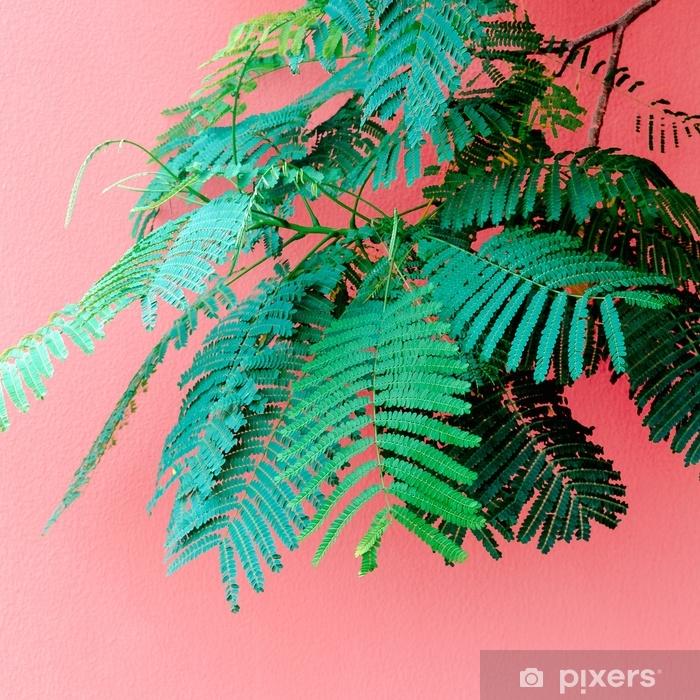Fototapeta winylowa Rośliny na różowym minimalnym pojęciu. tropikalna zieleń na różowym ściennym tle. - Rośliny i kwiaty