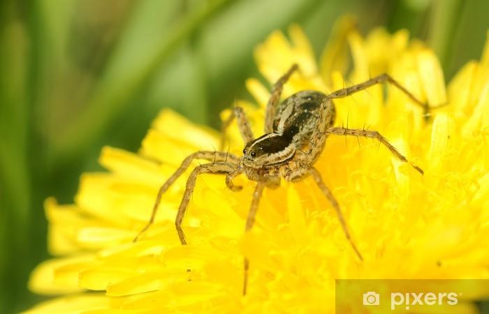 Papier peint vinyle Pissenlit et une araignée. - Autres Autres
