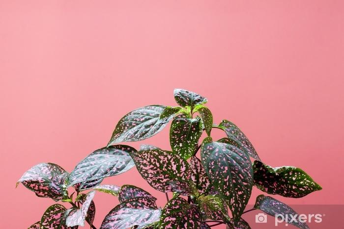 Vinyl Fotobehang Kleurrijke plant op roze achtergrond. minimale creatieve stillevens. plat leggen - Bloemen en Planten