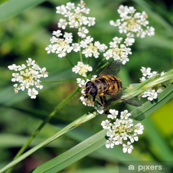 Plakat Pszczoła - Inne Inne
