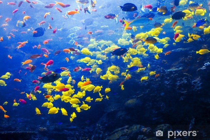 Pacific barrier reef with tropical fishes Pixerstick Sticker - Themes