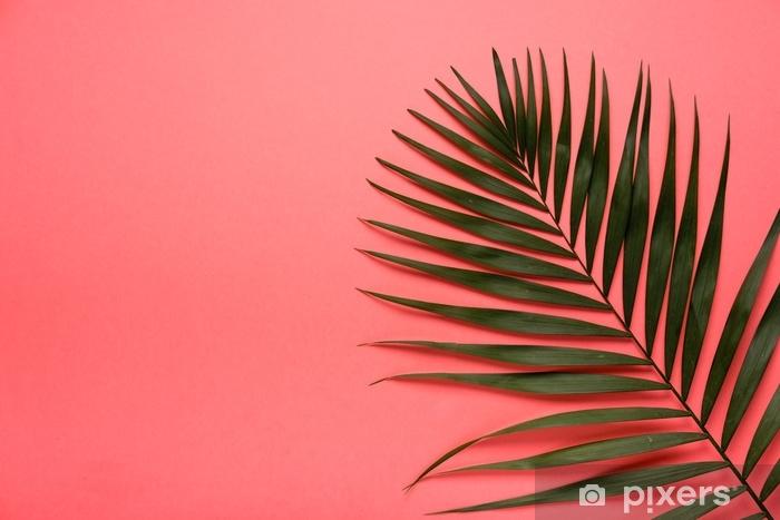 Papier peint vinyle Tropical été tendance laisse sur fond rose. couleur d'été lumineuse. style minimal. - Ressources graphiques