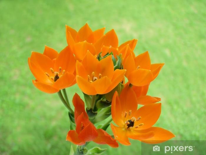 Naklejka Pixerstick Milchstern - Kwiaty