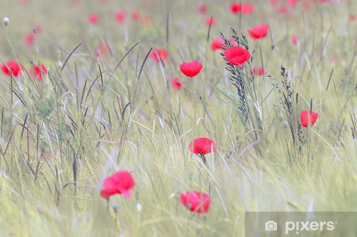 Naklejka Pixerstick Czerwony mak - Kwiaty