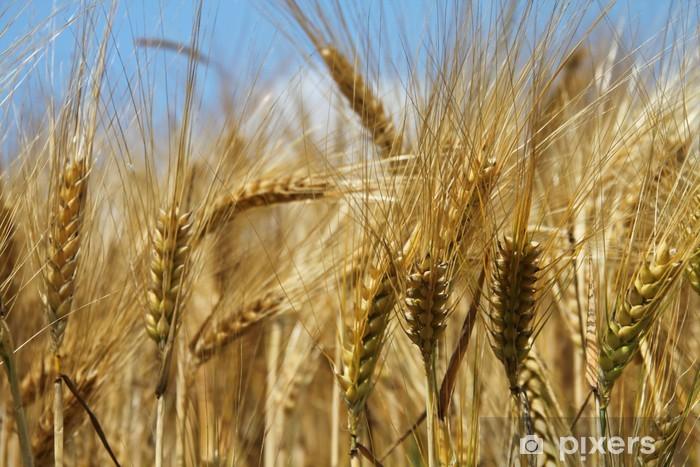 Vinylová fototapeta Uši pšenice a modrou oblohu - Vinylová fototapeta