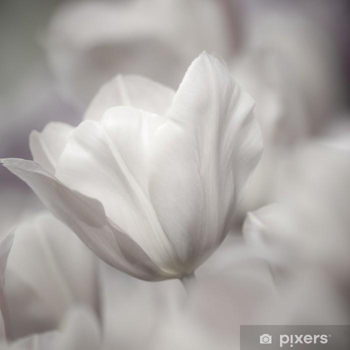 Vinilo Pixerstick La bella arte de primer plano Tulipanes, confuso y nítido - Temas