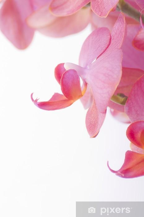 Vinyl-Fototapete Orchidee - Blumen