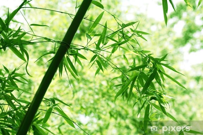 Papier peint vinyle Bambou - Plantes