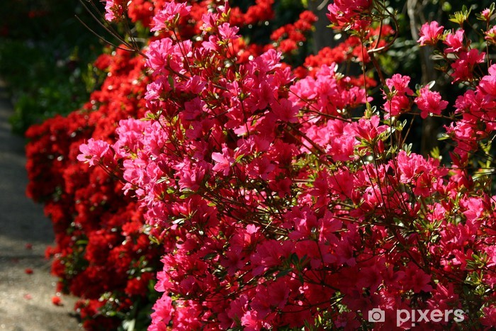 Naklejka Pixerstick Bugenwilli - Kwiaty