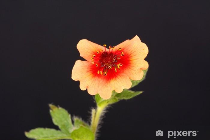 Sticker Pixerstick Geum - Fleurs