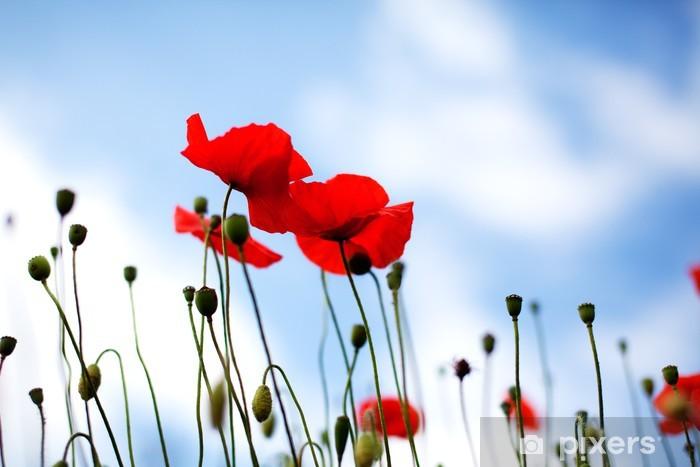 Papier peint vinyle Mohnblume Papaver rhoeas - Fleurs