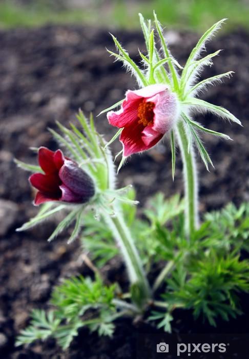 Pixerstick Aufkleber Küchenschelle - Blumen