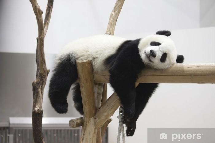 Fototapeta winylowa Reszta panda - Pandy