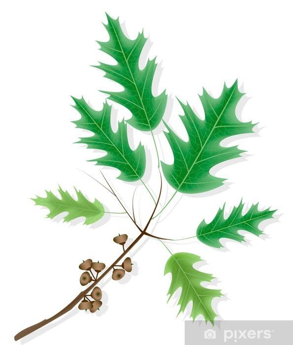 Papier peint vinyle Direction générale de chêne d'érable d'ornement avec des glands - Saisons