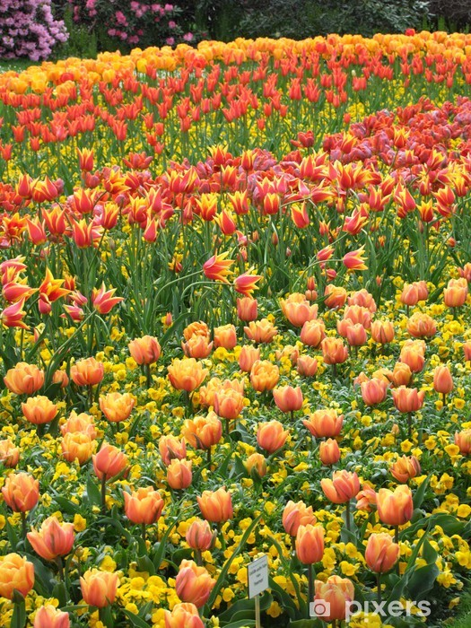 Naklejka Pixerstick Blumenfeld - Kwiaty