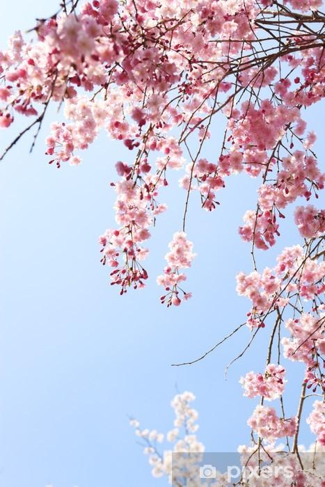 Papier peint vinyle Pleurant cerise - Fleurs