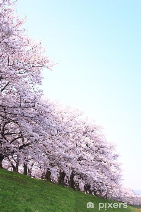 Fototapeta Winylowa Wiersz Wiśni Kwiat Drzew