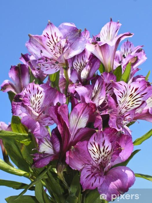 Naklejka Pixerstick Alstroemeria - Kwiaty