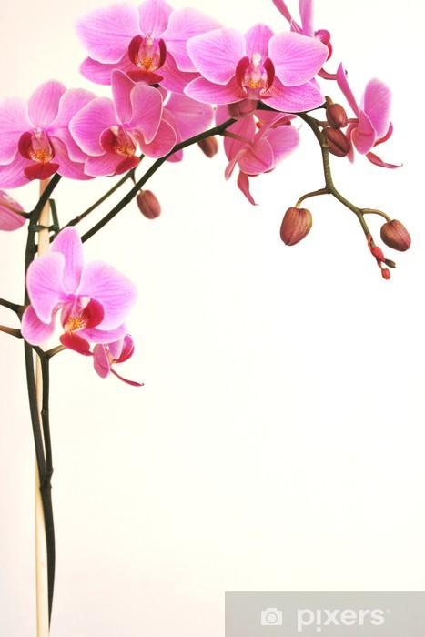 Papier peint vinyle Orchidée - Styles