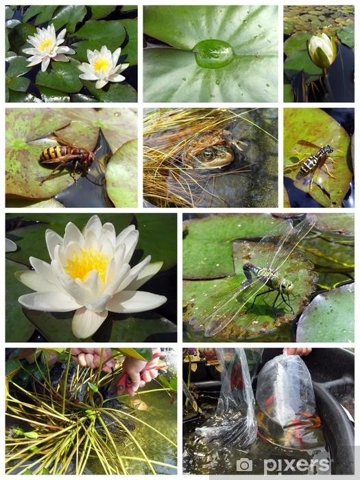 Fensteraufkleber Création d\'un bassin de jardin, faune et flore ...