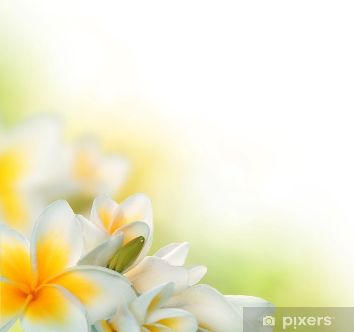 Poster Frangipani Spa Fleurs border.Plumeria - Saisons