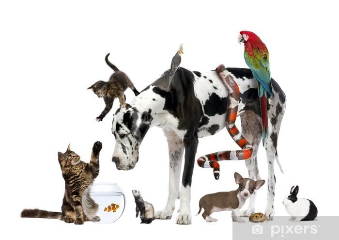 Fototapeta winylowa Grupy zwierząt domowych wraz z przodu białe tło - Ssaki