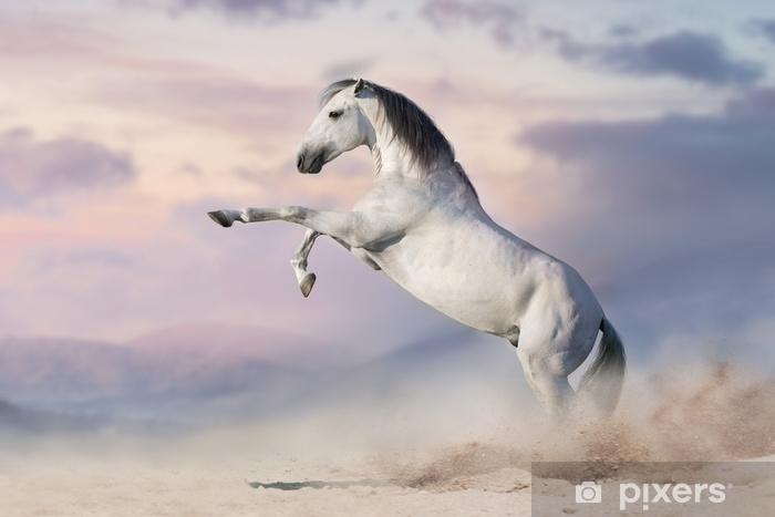 carte da parati cavallo bianco che si impenna nella polvere del deserto.jpg