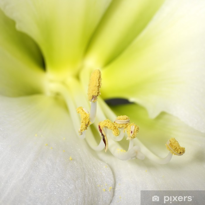 Poster Makroaufnahme einer zarten, weißen Blüten - Blumen