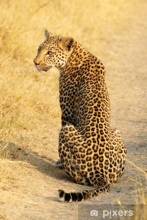 Naklejka Pixerstick Siedzi młoda lamparta w Moremi Botswany - Afryka