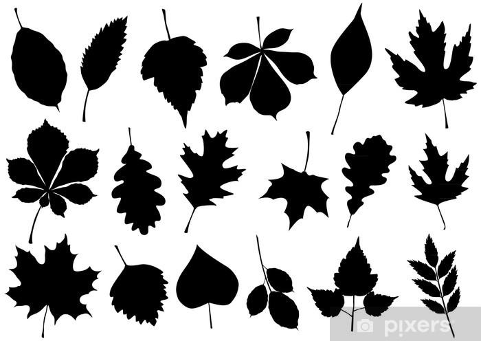 Vektör çizim 18 Sonbahar Yaprak Siluetleri Ayarlayın Duvar Resmi