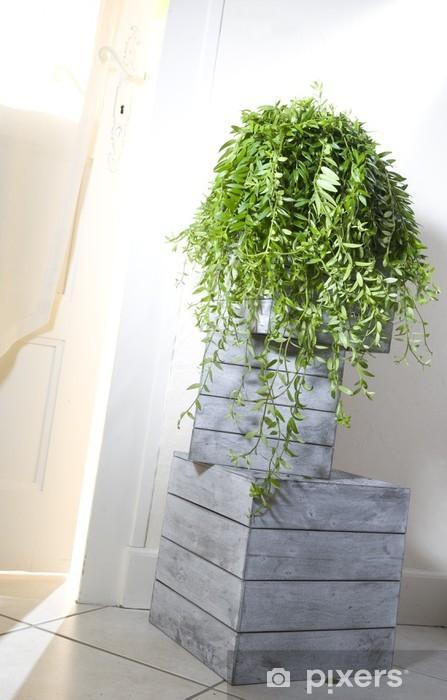 Papier peint vinyle Suspension Aeschynanthus - Plantes
